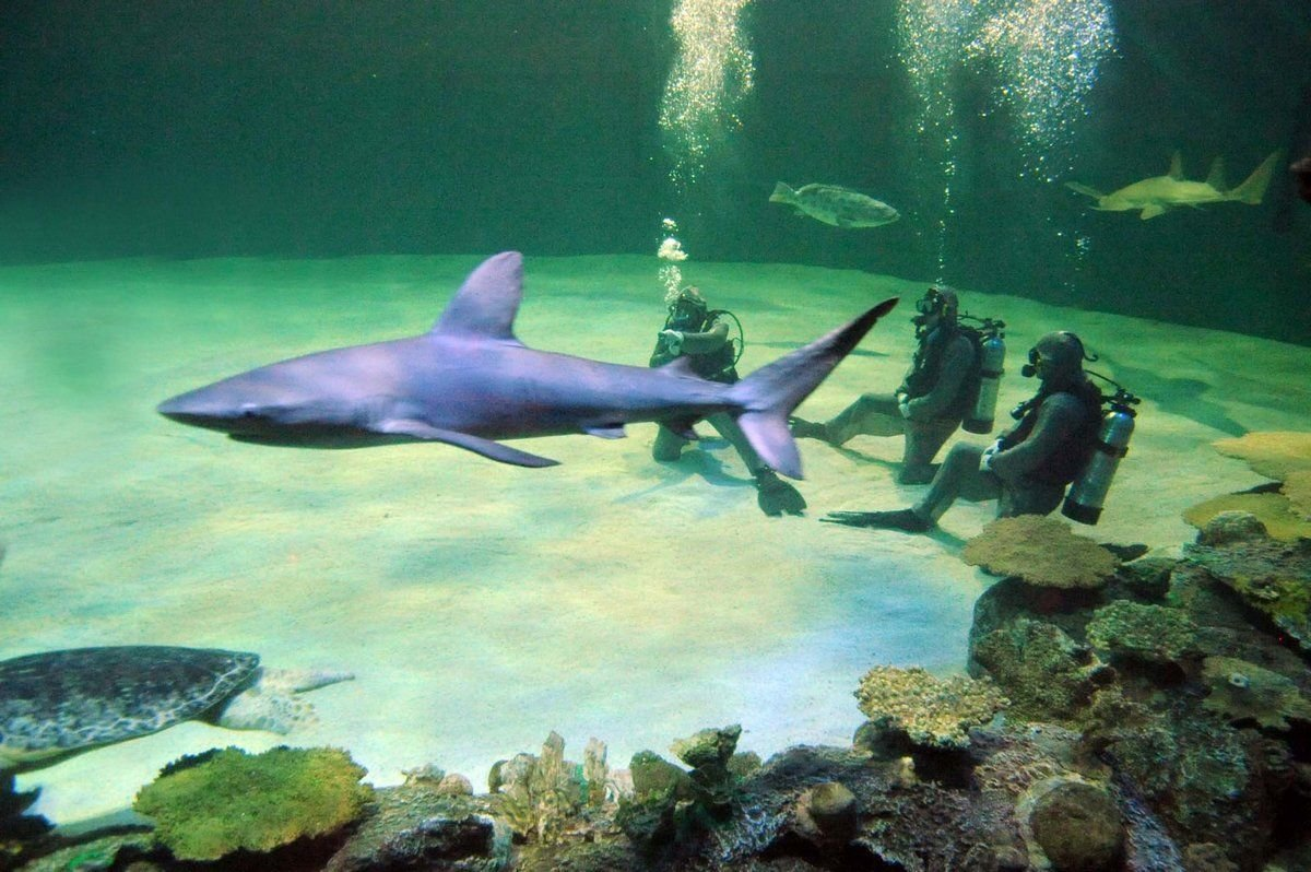 Mandalay Bay Las Vegas - Shark Reef Aquarium - Dive With Sharks