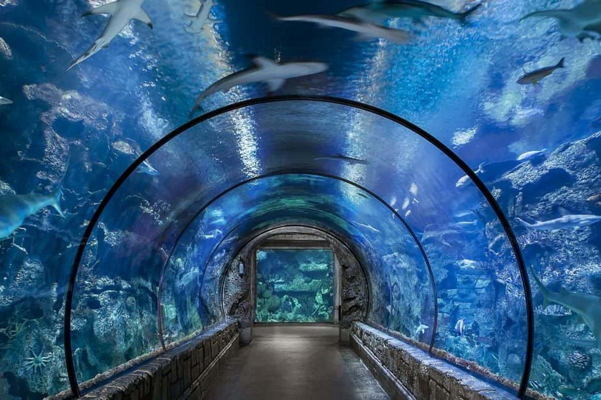 Shark Reef at Mandalay Bay Las Vegas Discount