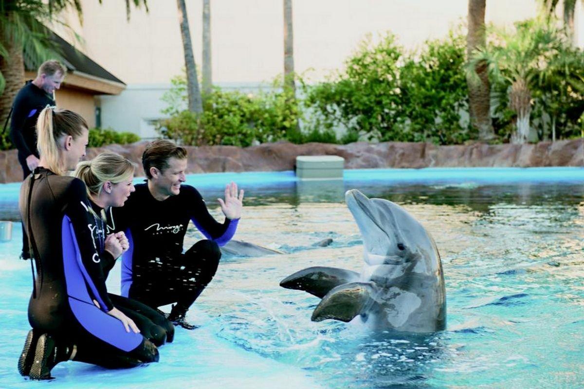 Sigfried & Roy's Secret Garden And Dolphin Habitat Discount